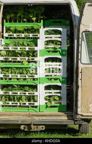 Plants loaded in van - Stock Image