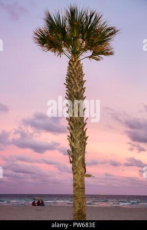 Hollywood Florida Hollywood Beach Boardwalk Atlantic Ocean one palm tree beach ocean dusk muted pink sand fronds trunk group - Stock Image