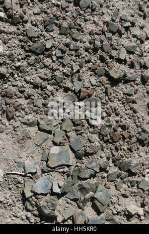 Turtle shell fossils Utah Great Basin desert - Stock Image