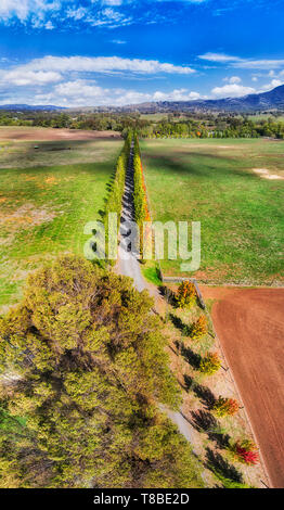 Leave tree alley through horse farms in Blandford town near Scone in Upper Hunter Valley, NSW, Australia. Vertical aerial panorama top down over tree  - Stock Image