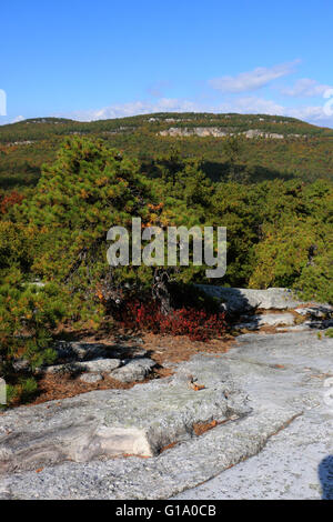 Tree and cliffs Shawangunk Mountains, The Gunks New York - Stock Image