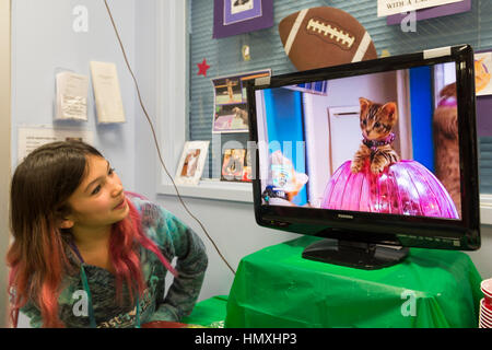 Wantagh, New York, USA. February 5, 2017. SUZANNE FERRARA, 10, of Plainview, watches kitten playing in pink Hamster - Stock Image