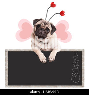 cute sweet pug puppy dog with diadem and butterfly wings leaning with paws on blackboard promotional sign, isolated - Stock Image