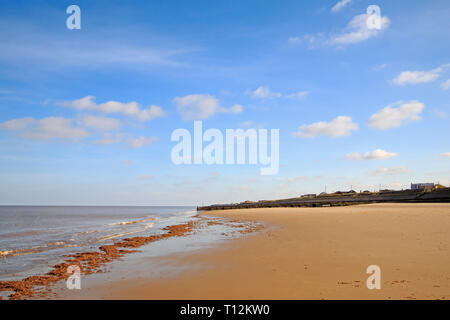 A view of the shoreline at low tide with washed-up seaweed on the North Norfolk coast at Bacton-on-Sea, Norfolk, England, United Kingdom, Europe. - Stock Image
