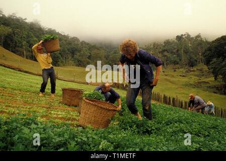German immigration in south Brazil, family work, small landowners.  Pomerode city, Santa Catarina State, Brazil. - Stock Image