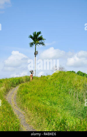 Local Balinese lady carrying a basket in the traditional Balinese way along  a footpath in the Balinese countryside just outside the town of Ubud. Bal. - Stock Image