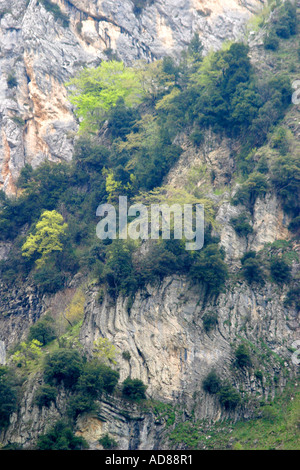 rocks and trees of the Gola dell'Infernaccio in the Sibillini National Park of Le Marche Italy - Stock Image