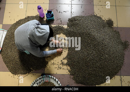 Medan, Indonesia. 18th Feb, 2019. A worker sorts Arabica green coffee beans for export in Medan, Indonesia, on Feb. 18, 2019. Credit: YT Haryono/Xinhua/Alamy Live News - Stock Image