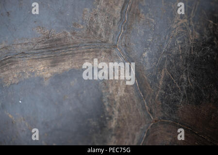 Close-up of Giant Tortoise shell detail, Galápagos - Stock Image