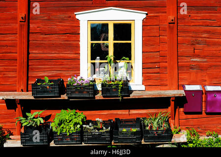 beauty, sweet, peaceful, house, window, flowers, antique, rural, leaded-window, old house, old-house, wood, wooden - Stock Image