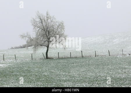 Lonely tree in countryside during snowy storm - Stock Image