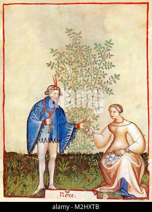 'Tacuinum Sanitatis', Roses - Stock Image