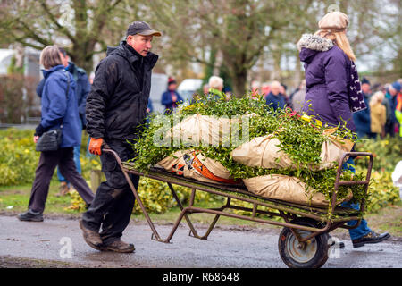Mistletoe Tenbury Wells, Worcestershire, UK. 4th Dec 2018. Mistletoe for sale by auction. Man pushing a sack truck loaded with wraps of mistletoe. - Stock Image