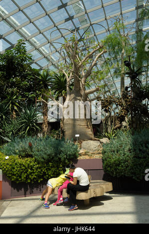 Woman and child in front of huge boabab tree in Flower Dome, Gardens by the Bay, Singapore - Stock Image