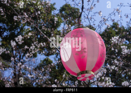 Decorative paper lantern with Cherry Blossom design during cherry blossom season in Japan - Stock Image