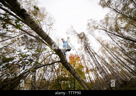 Low angle view of male backpacker walking on tree branch against sky - Stock Image