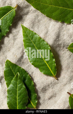 Raw Green Organic Bay Leaves Ready to Cook With - Stock Image