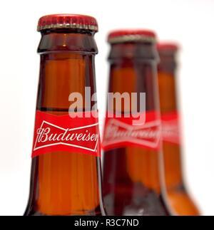 Budweiser, king of beers, bottles, labels - Stock Image
