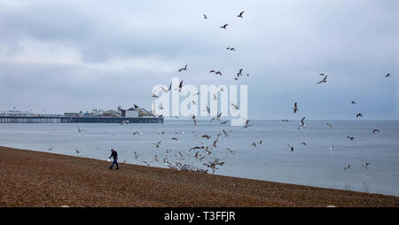 Brighton, UK. 09th Apr, 2019.  Seagulls fight for fish scraps from a local fish stallholder on Brighton seafront on a grey wet day along the south coast today but the forecast is set to improve over the next few days throughout Britain Credit: Simon Dack/Alamy Live News - Stock Image