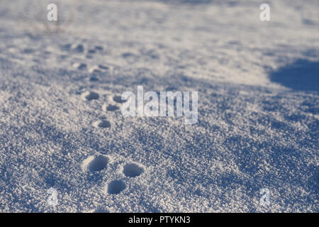 Texture of ice in winter. Pieces of frozen water on a street in the winter. The texture and texture of the frozen water in winter and outdoor. - Stock Image