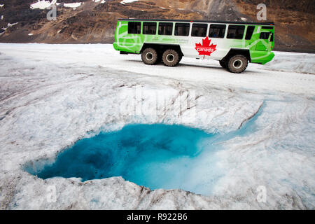 Meltwater pools and tourist buggy on the Athabasca glacier which is receding extremely rapidly and has lost over 60% of its ice mass in less than 150 years. Canadian Rockies. - Stock Image