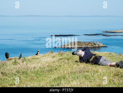 Photographer taking photo of puffins on Lunga, Treshnish Isles, Scotland - Stock Image