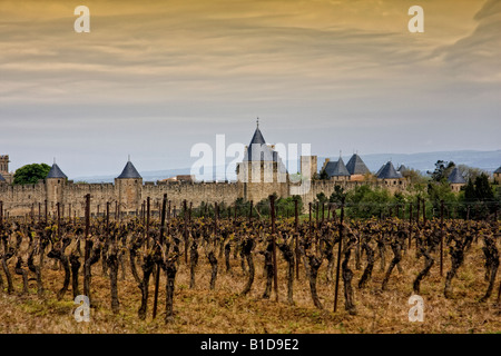 walled village of Carcassonne France with traditional vineyard in foreground - Stock Image