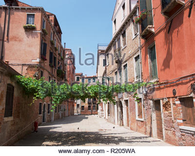 Deserted street with grape vine growing between the buildings in the Cannaregio district: Venice. - Stock Image