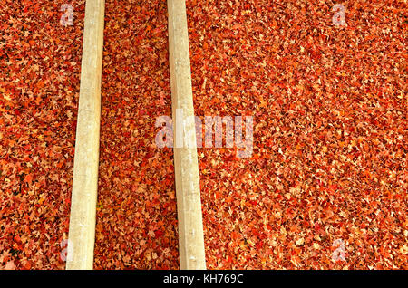 Pole aerial image of autumn leaves surrounding two concrete walls. - Stock Image