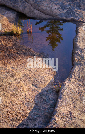 Tidal pool reflection along the coast of Acadia National Park in Maine - Stock Image