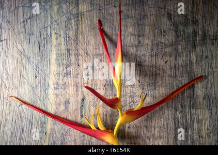 heliconia flower closeup on rustic wood surface - Stock Image