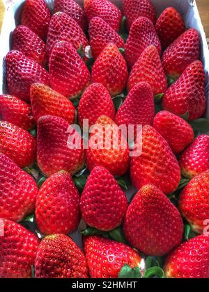 Box full of fresh strawberries - Stock Image