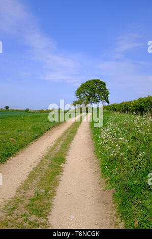 countryside farm track with field and hedgerow, north norfolk, england - Stock Image