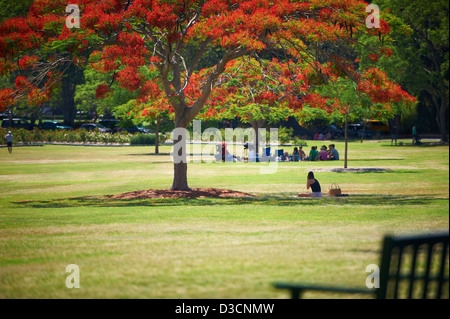 New Farm Park, QLD Australia - Stock Image