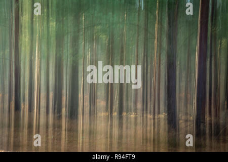 Abstract with blurred forest scene, trees, tree trunks, landscape - Stock Image