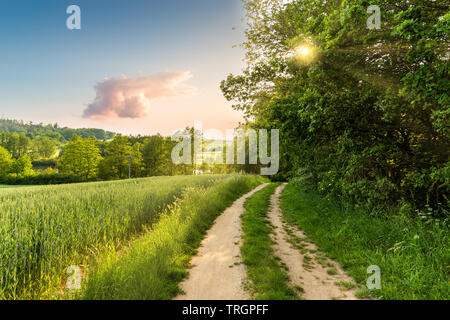 Summer scenery. The deciduous forest and rural road on a warm evening. - Stock Image