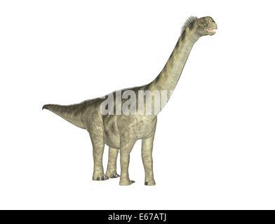 Dinosaurier Camarasaurus / dinosaur Camarasaurus - Stock Image