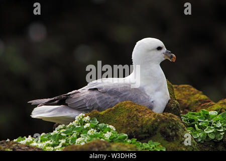 Seagul in nature - Stock Image