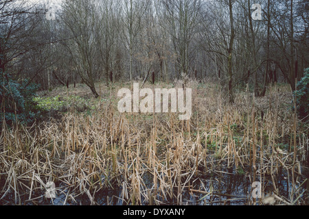Swamp-like area near the Boat House at the Yorkshire Sculpture Park. - Stock Image