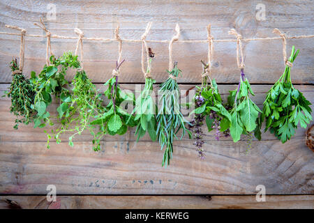 Assorted hanging herbs ,parsley ,oregano,mint,sage,rosemary,sweet basil,holy basil,  and thyme for seasoning concept - Stock Image