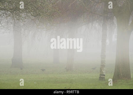Salisbury, UK. 28th December 2018. Uk Weather. 10:25am and Salisbury still covered in fog Credit Paul Chambers/ Alamy News - Stock Image