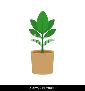 Ficus potted flat icon, indoor plant, flower vector illustration isolated on white background - Stock Image
