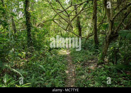 A path in the luxuriant rainforest of Mushu Island, Papua New Guinea - Stock Image
