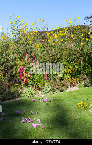 Shadows in the garden - Stock Image