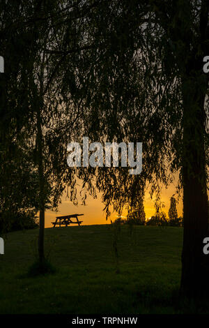 Isolated picnic bench and willow tree in silhouette on grassy hillside in a UK public country park set against a golden, evening sunset sky backdrop. - Stock Image