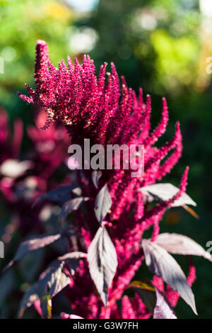strange red plant - Stock Image
