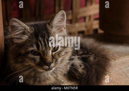 Brown cute cat that cold by rain - Stock Image