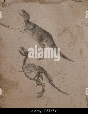 Dinosaurier Tyrannosaurus rex / dinosaur Tyrannosaurus rex - Stock Image