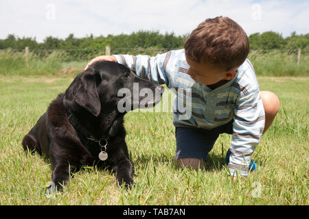 Black Labrador Dog, Full profile elderly female adult, Young boy patting in field, West Sussex, England, UK - Stock Image