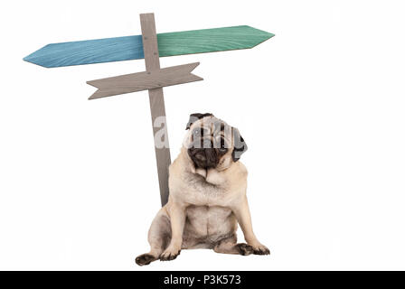 funny cute pug puppy dog sitting down next to blank signpost; with signs pointing left and right, isolated on white background - Stock Image